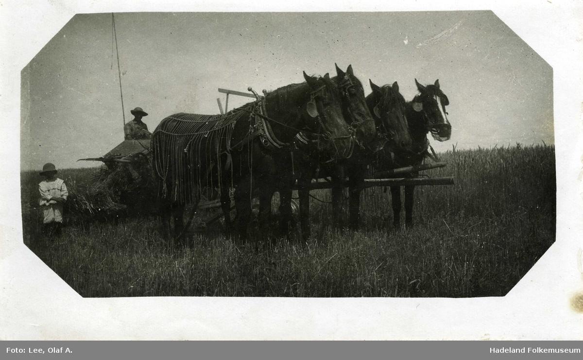 Fire hester foran landbruksmaskin i åker. Mann og gutt bak.