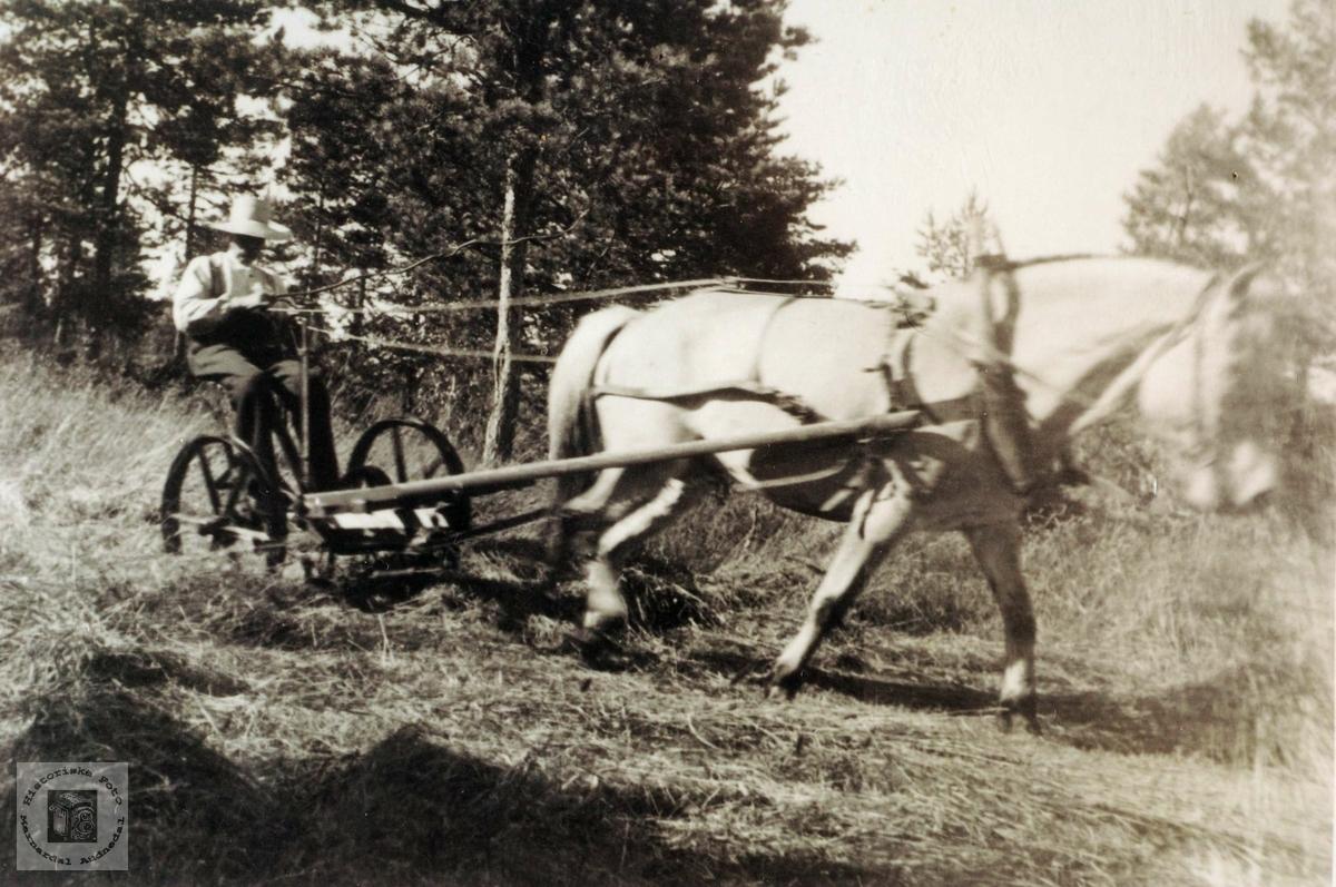 Theodor Aagedal slår grasset med hesteslåmaskin på Viamyr, Selandsheia i Grindheim.