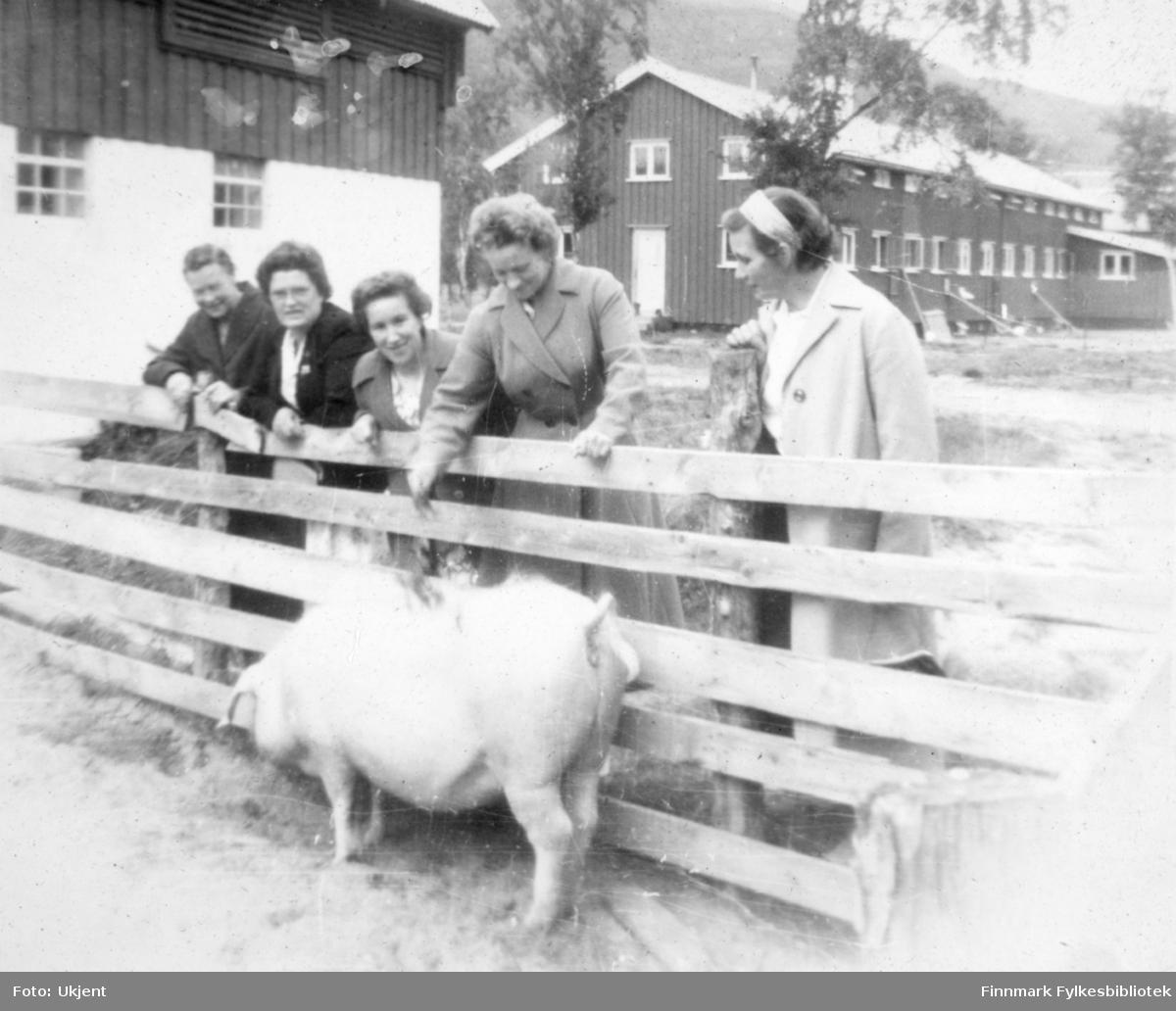 Kautokeino husmorslag, bildet tatt på 1950-tallet. En gjeng med kvinner står foran et gjerdet. Innenfor gjerdet står en gris. Kvinnene har på seg kåper, skjorter og skjørt. Kvinnen helt til høyre har et bånd rundt hodet. I bakgrunnen kan man se hus med vinduer på. Det er også mulig å skimte enkelte trær.