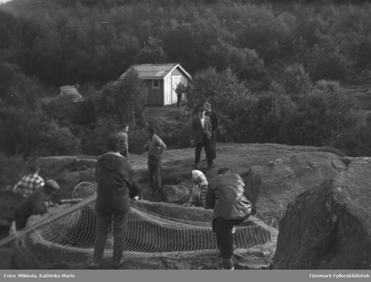 Käpälä-fiske i Neiden, ca. 1960-1965
