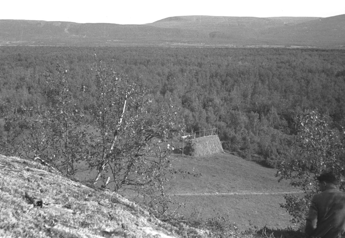 En hesje på et jorde fotografert fra en høyde i nærheten. Ryggen på en ukjent person ses nederst til høyre i bildet.