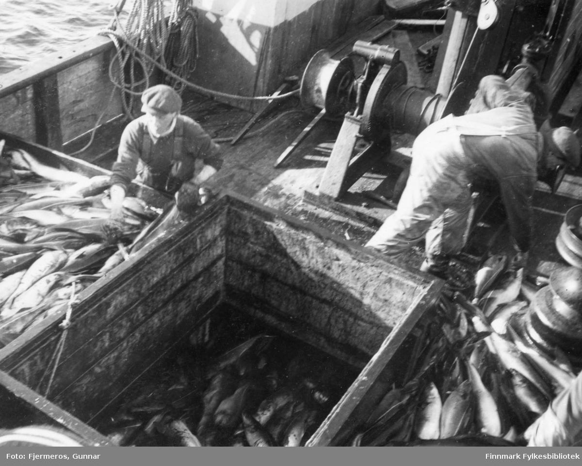 Lasterommet til en fiskeskøyte er i ferd med å fylles med sei. To ukjente menn i arbeidsklær står ved luka.