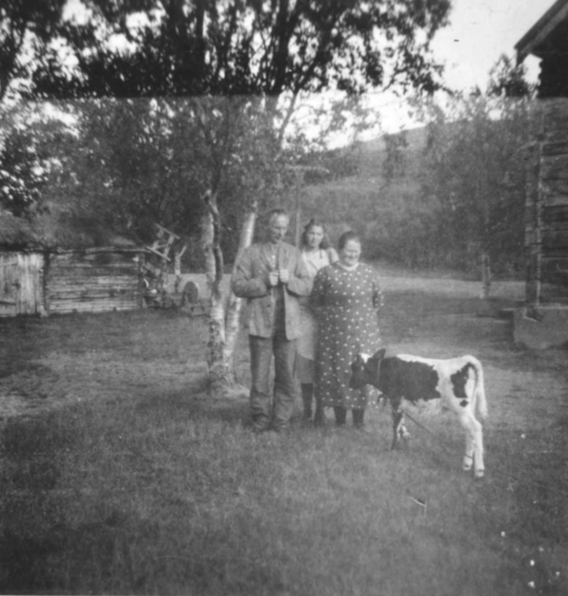 """""""Aina Marie Aronsen i Luftjok med besøkende og kalven. Bildet er tatt ca. 1935. Gjestfriheten var spesielt stor hos Aronsen."""" Tømmerhuset til høyre huset også Luftjok skole på den tiden."""
