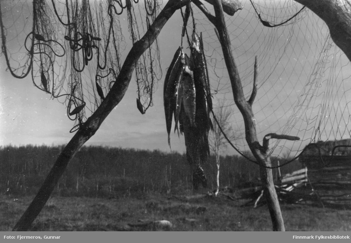 Flere skutte fugler henger på en stolpe under et fiskegarn. Stedet er ukjent.