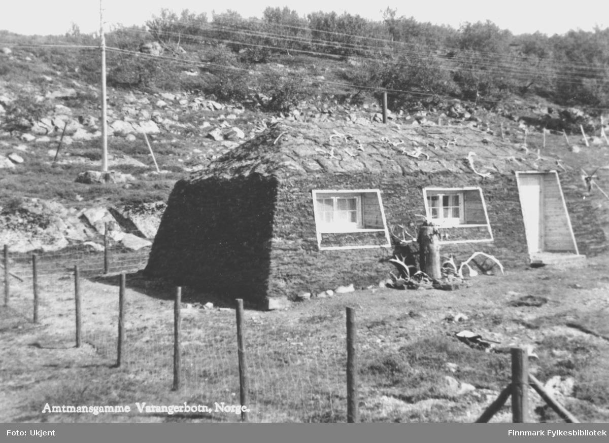 Påskrift på bildet:'Amtmannsgamme Varangerbåtn, Norge.'. På gammen kan man se en dør, vindu og reingevir på taket. Bak gammen ser man en strømstolpe og rundt gammen er det blitt satt opp et gjerde.