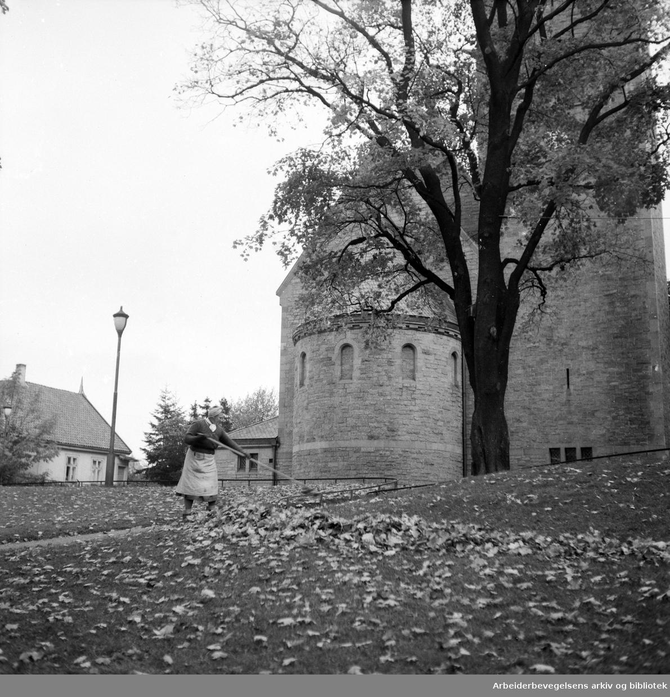Karin Solheim raker løv utenfor Vålerenga kirke. Oktober 1951.