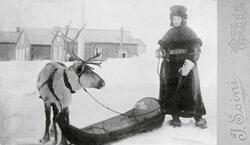 Bildet viser Ragna Olsen med rein og pulk år ca. 1900. Ragna