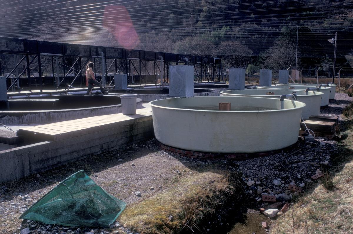 Uteområdet til et settefiskanlegg. Karene inneholder fisk og de firkantede boksene er fôrautomater.