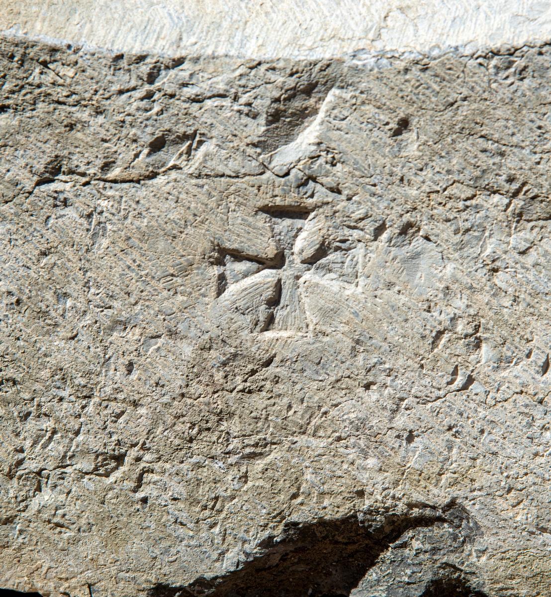 Istandsetting av mur på Storhamarlåven. Murer Tom Greve plukker nøye ned stein for stein, før han til slutt skal bygge opp igjen muren.  Stein som har tilhørt en av dørportalene eller vindusramme på den gamle domkirken. Den var blitt gjenbrukt i oppbyggingen av Storhamarlåven som gårdsbygg på 1820-1830 tallet. Andreaskors.