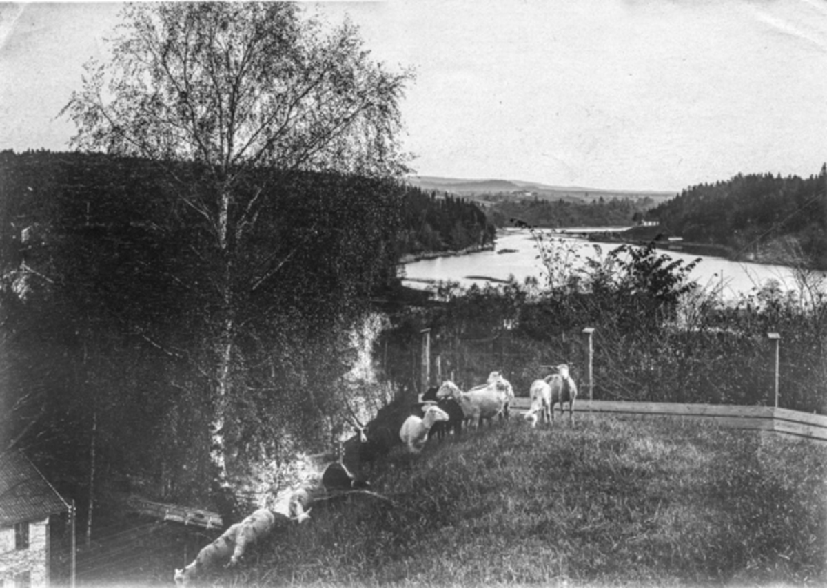 """""""Parti fra Vormen, Eidsvoll"""""""