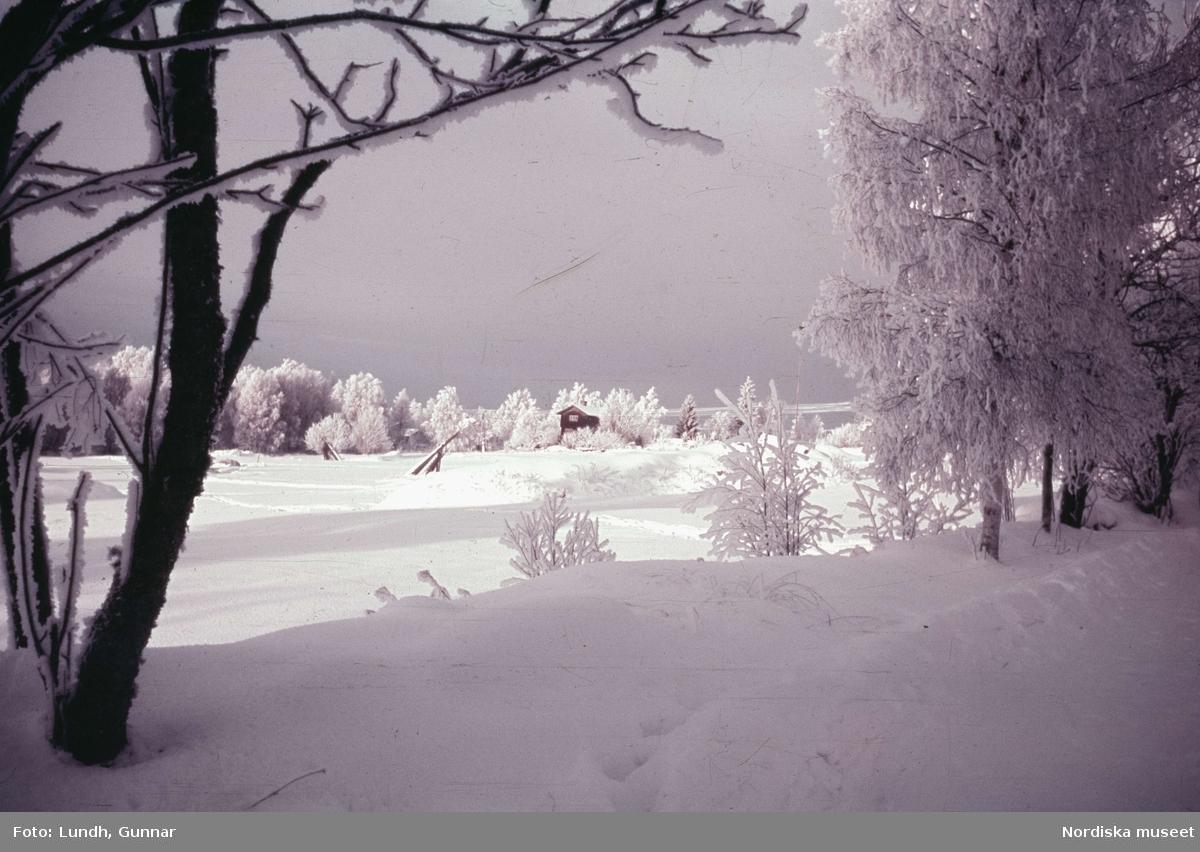 Dalarna. Tällberg på vintern med ett öppet fält och snöklädda träd.