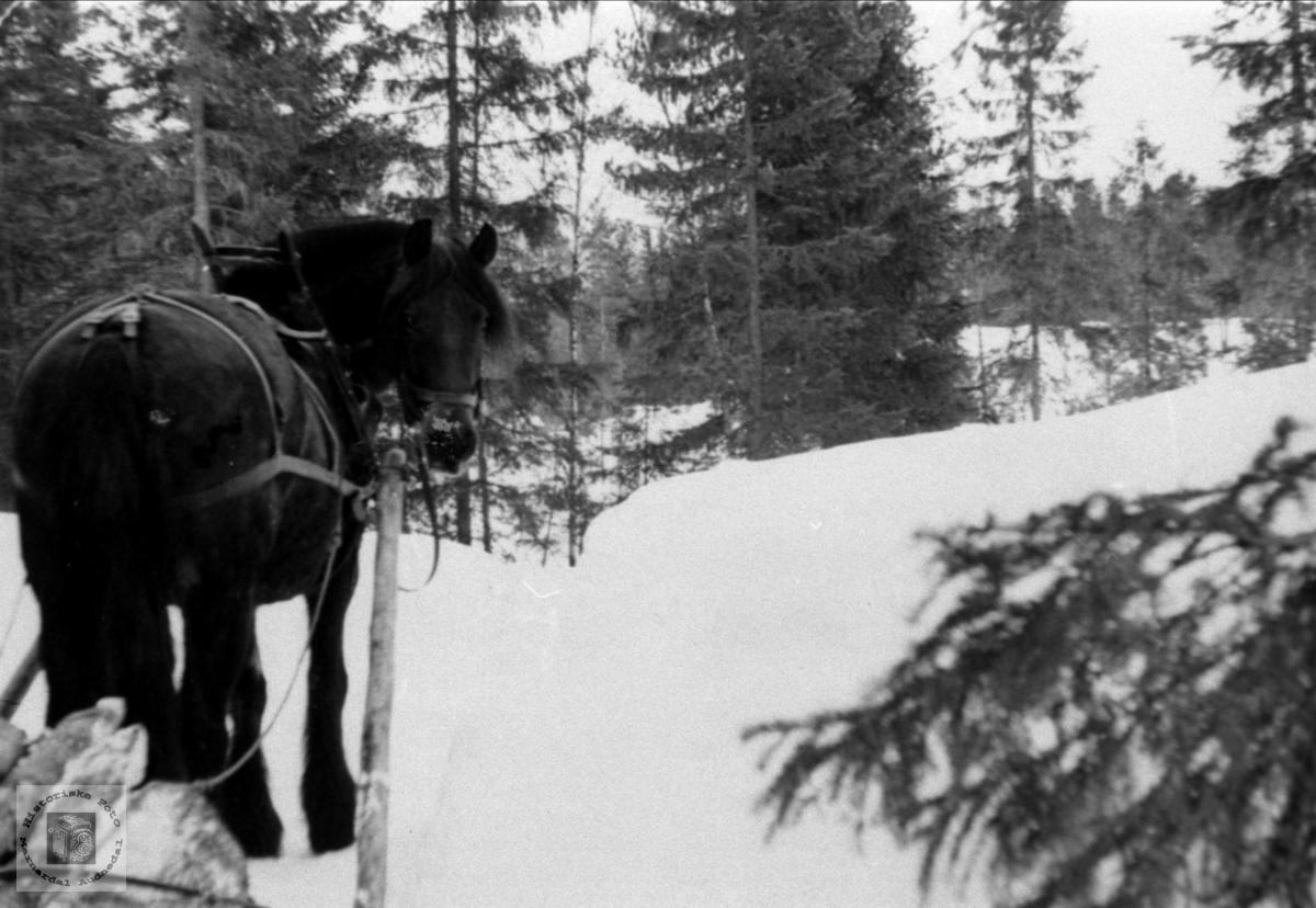 Tømmerkjøyring på Foss, Bjelland.