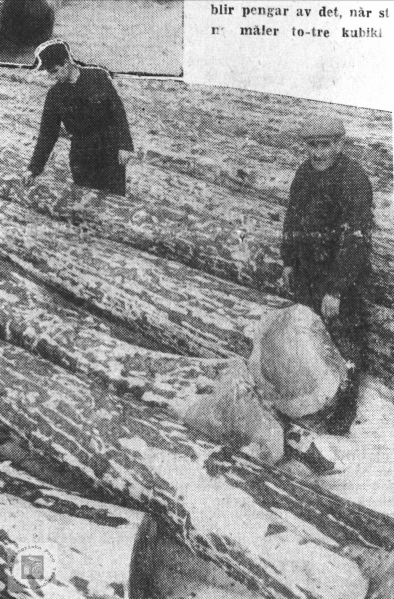 Skogsdrift i Bue skog Øyslebø.