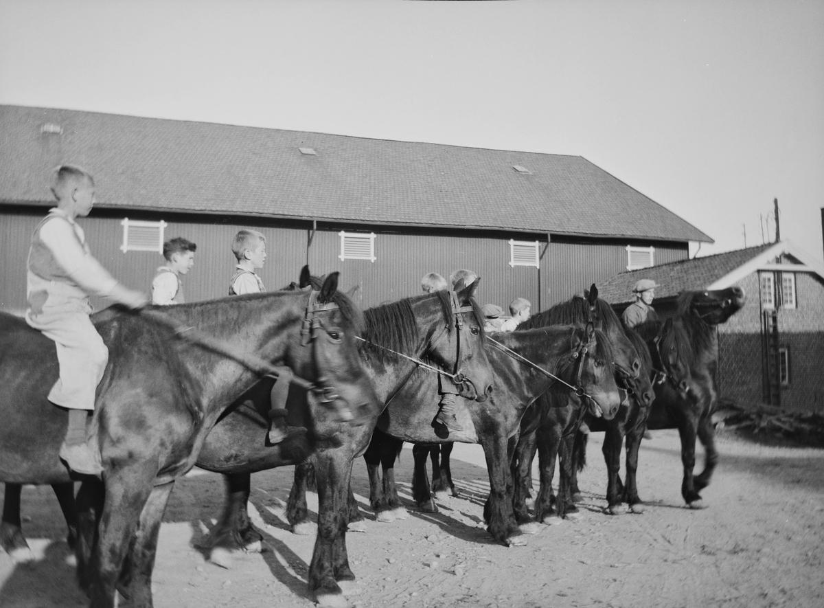 Det ser ut til å være åtte gutter på hver sin hest, som nesten står på linje, på gårdsplassen på Linderud Gård.