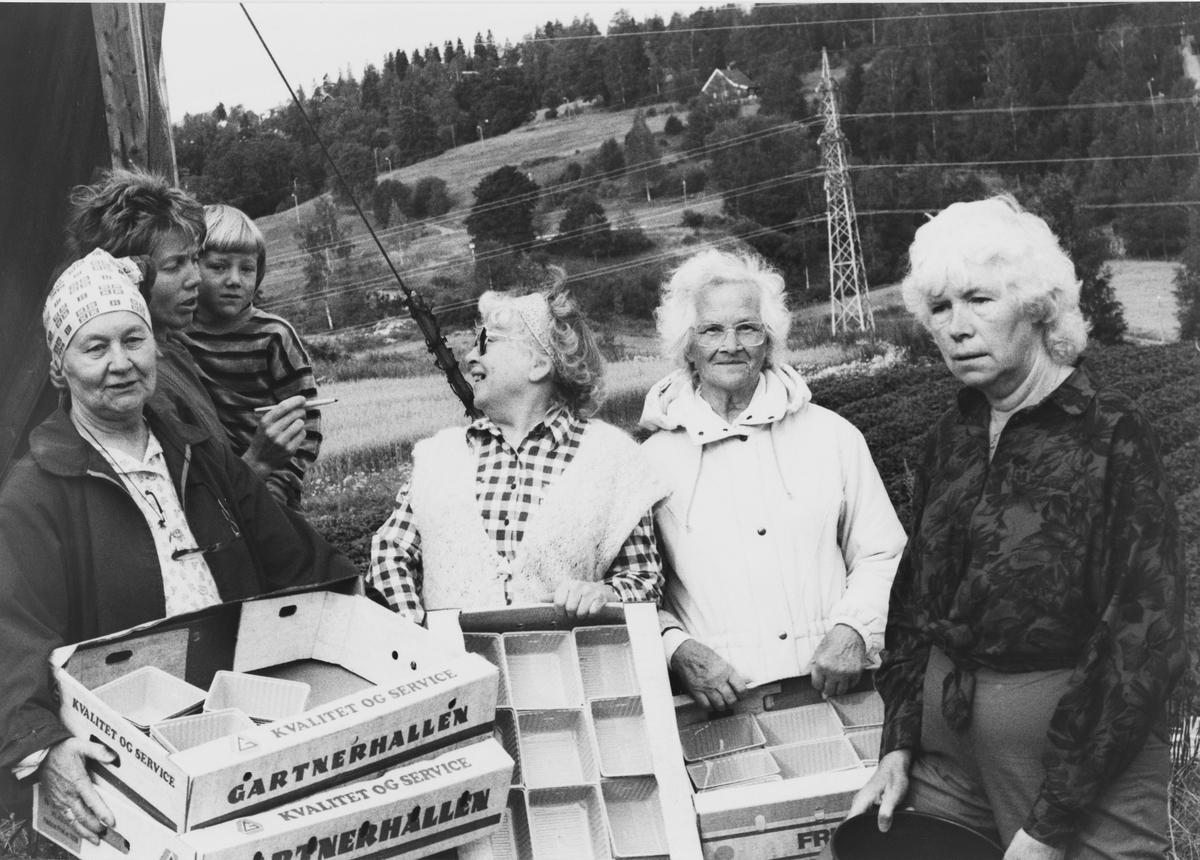 Selvplukk av jordbær hos familien Henriksen på Nedre Haug, Rotnes
