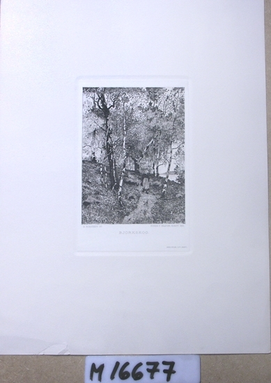 Etsning (reproduktion) Flicka i sjalett, vandrar på en stig i björkskog.
