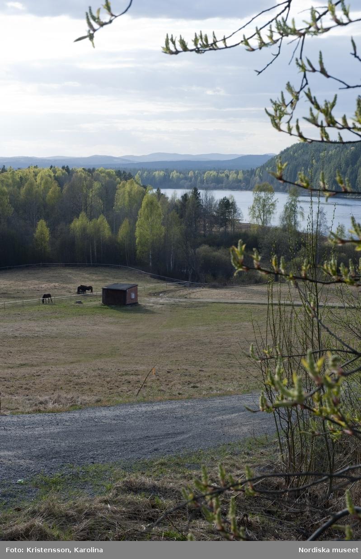 Åkermark i omgivningen kring Rosa Taikons hus i Flor i Hälsningland