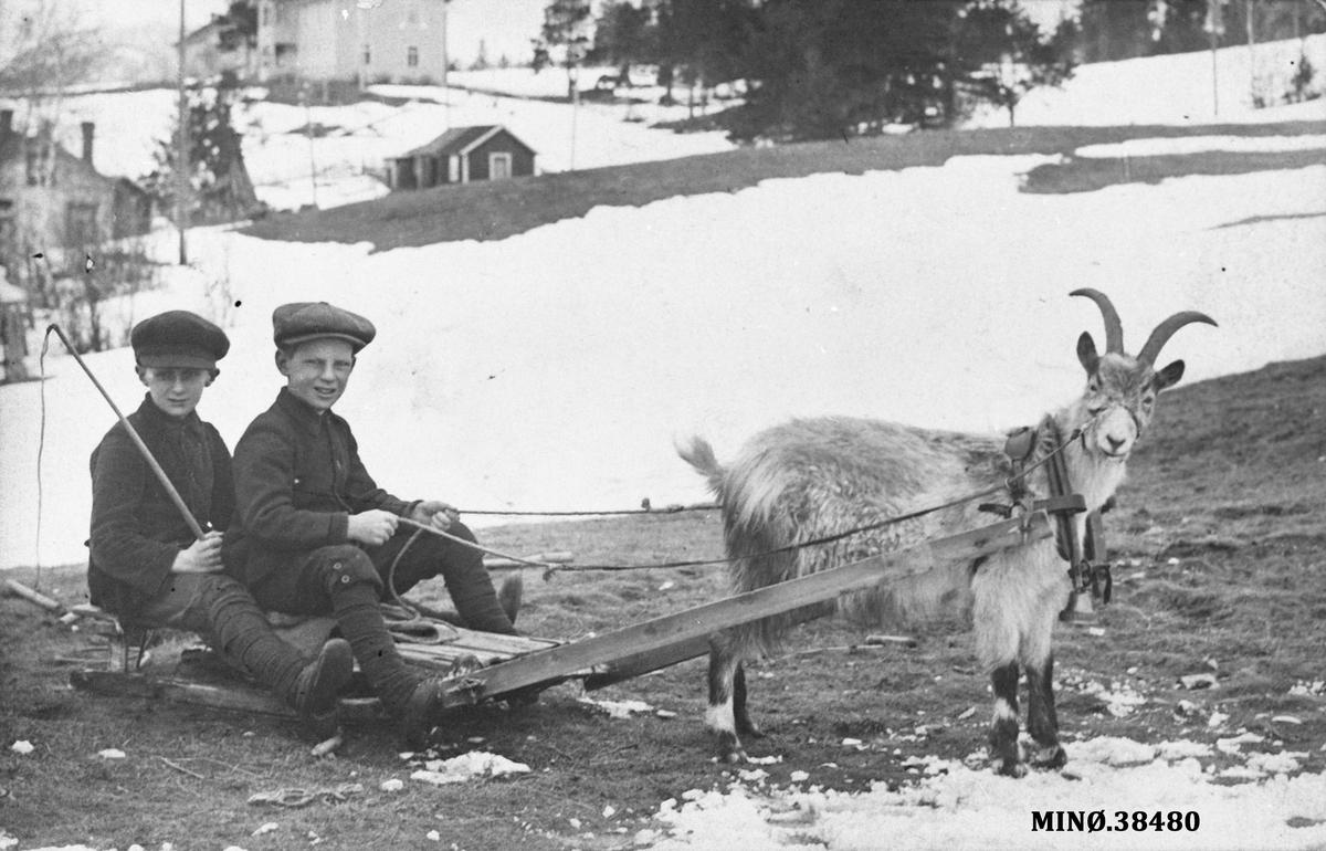To gutter kjører med geit og kjelke. Er den fremste gutten Bjarne Müller?