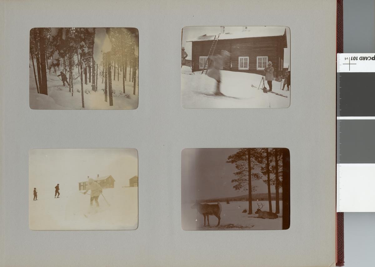 Renar i vinterlandskap under Smålands husarregemente K 4 vinterövning i Norrbotten omkring 1910.