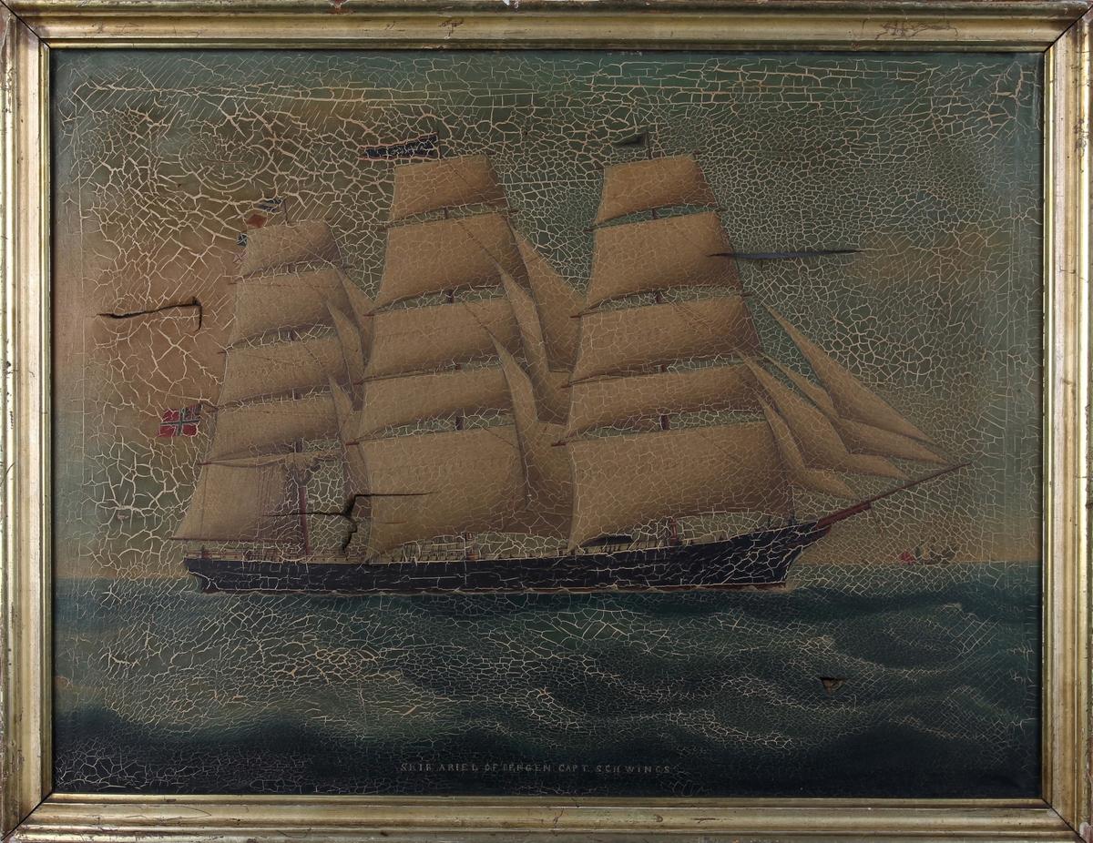 Skipsportrett av fullrigger ARIEL på åpen sjø med full seilføring, flagg med sildesalat i akter. Maleriet har store skader.
