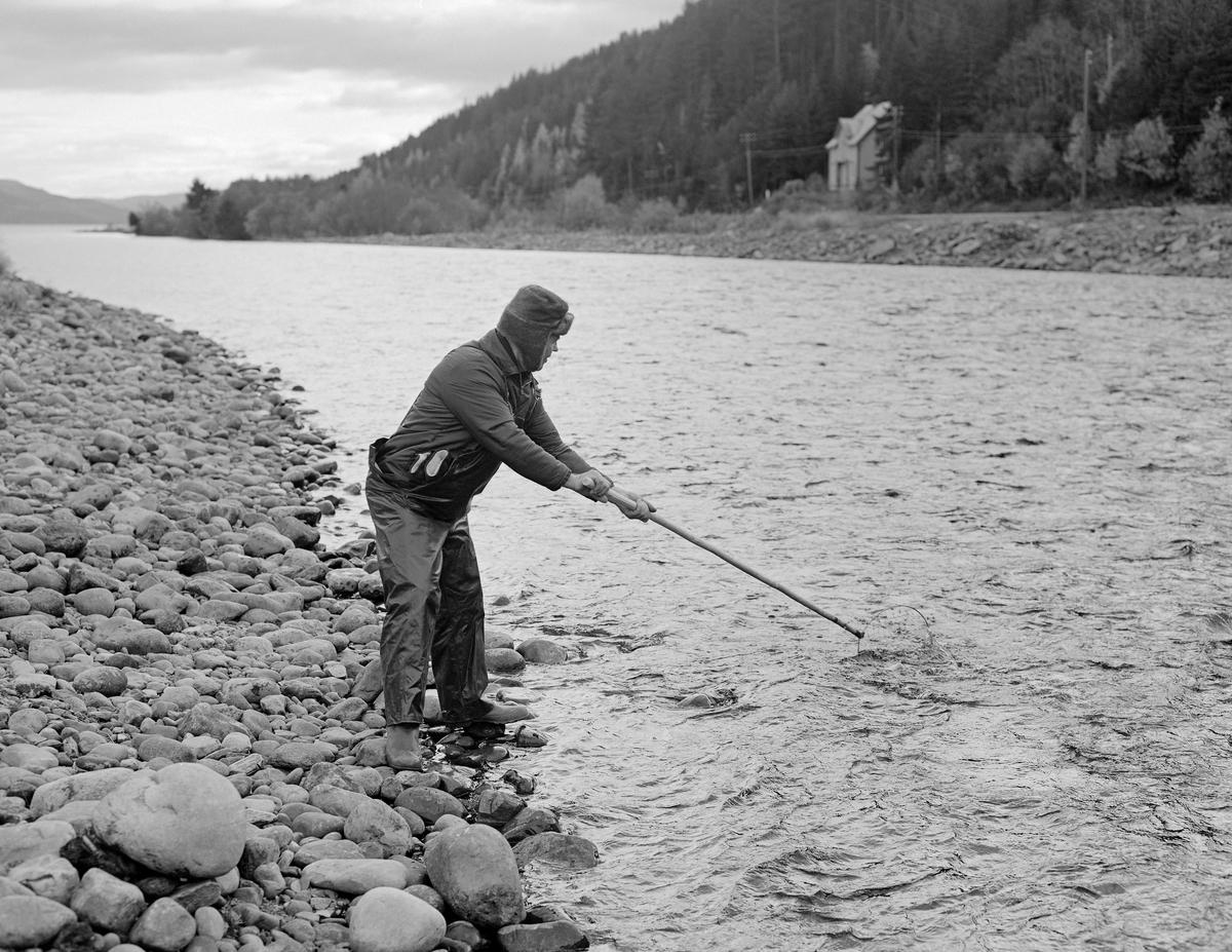 Håvfiske etter gytevandrende sik (Coregonus lavaretus) i Åkrestrømmen i Ytre Rendal i oktober 1975.  Her stod fiskeren på en steinete elvebredd med en håv som hadde cirka to meter langt skaft i hendene.  Han stirret ned i vannmassene, for om mulig å se svømmende sik mot lyse steinheller eller grusflater.  Når han hadde lokaliset fisken svingte han håven raskt ned i vannet i retning fisken.  Deretter kunne erfarne fiskere kunne oftest løfte den opp igjen med minst en sprellende sik i nettmaskene, i heldige tilfeller flere.  Men denne fiskemetoden krevde handlag og erfaring.  Det store sikfisket i Åkrestrømmen var et høstfiske, og fiskeren hadde i dette tilfellet tatt på seg gummistøvler og gummibukser for å holde seg tørr, og han hadde ørelapplue på hodet for å holde seg varm.  I 1964 skrev journalisten Håvar Skrede (1932-1976) en artikkel om dette fisket, der han blant annet beskrev dagfisket slik: «Om dagen ser fiskerne siken når den siger langsomt eller raskt over lyse steder på elvebunnen.  Da svinger de raskt det to meter lange håvskaftet og lar håven gå med strømmen mot fisken.  Som regel trekker de mest rutinerte rendøler håven opp igjen med minst én sprellende sik i maskene.  Noen ganger - når gangfisken går tett - kan håven inneholde både seks og syv fisker.  På slike gunstige dager har det hendt at en enkelt kar har tatt over tre hundre sik, men 60-70 fisker blir uansett en bra fangst både ved dag- og nattfiske.»