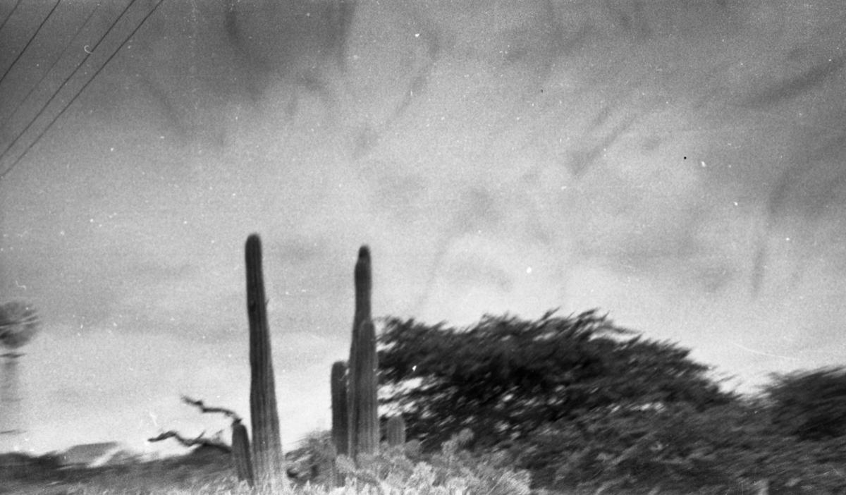 Kaktus i silhuett. Suderøy på vei til fangstfeltet.