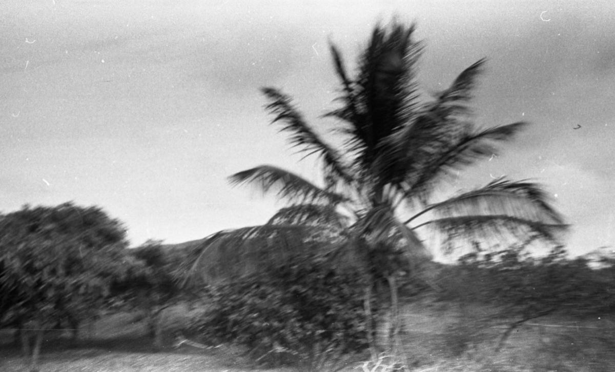 Palme i silhuett. Suderøy på vei til fangstfeltet.