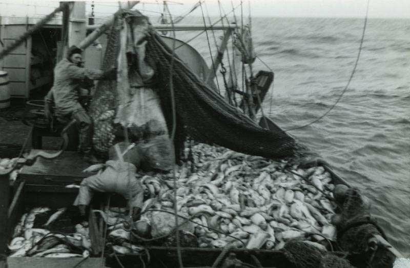 Fiskebåt med mannskap og fangst på dekk