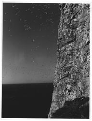 Fuglefjell. Vedøy - Røst