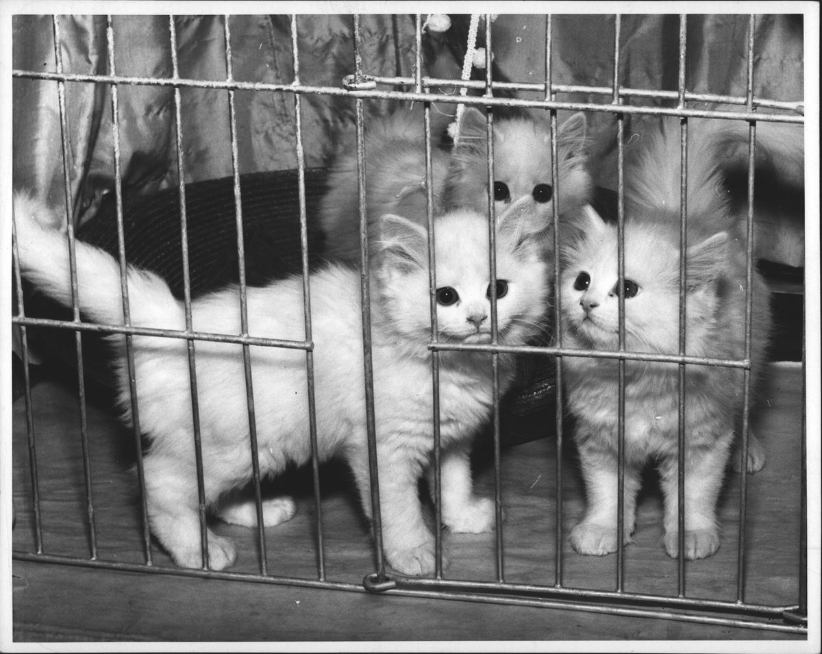 Er ikke disse kattepusene søte? De vil gjerne leke med dig