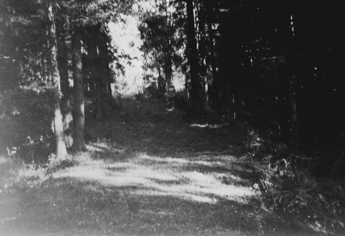 Fra veien Stenrud - Grønstvedt.
