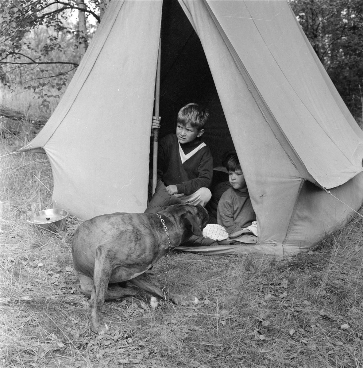 Hund och barn i tält på campingplats, sannolikt Uppland
