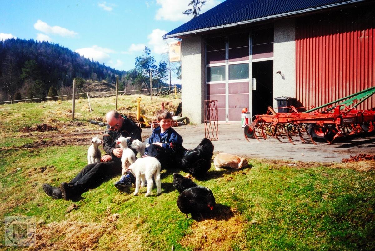 Ei kosestund med lam, kanin og høner i vårsola. Audnedal.