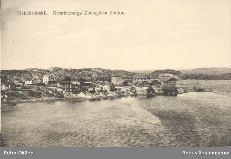 """Tryckt text på kortet: """"Fiskebäckskil. Kristinebergs Zoologiska Station."""" """"Förlag: Tekla Bengtssons Pappershandel, Fiskebäckskil."""""""