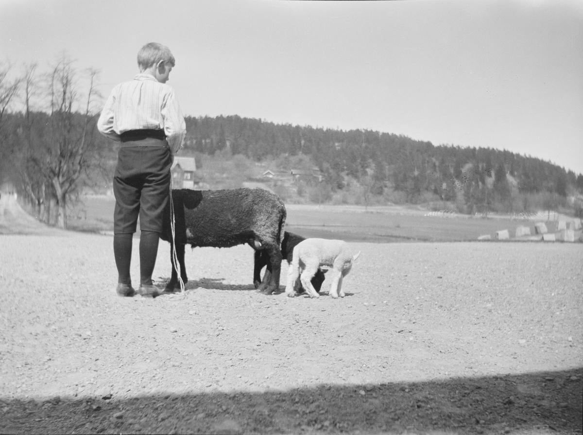 Iacob Ihlen Mathiesen står med ryggen til fotografen sammen med en søye og to lam. De er på gårdsplassen til Linderud Gård. I bakgrunnen sees lindealléen, jorder og en lav skogkledt ås med en liten gård.