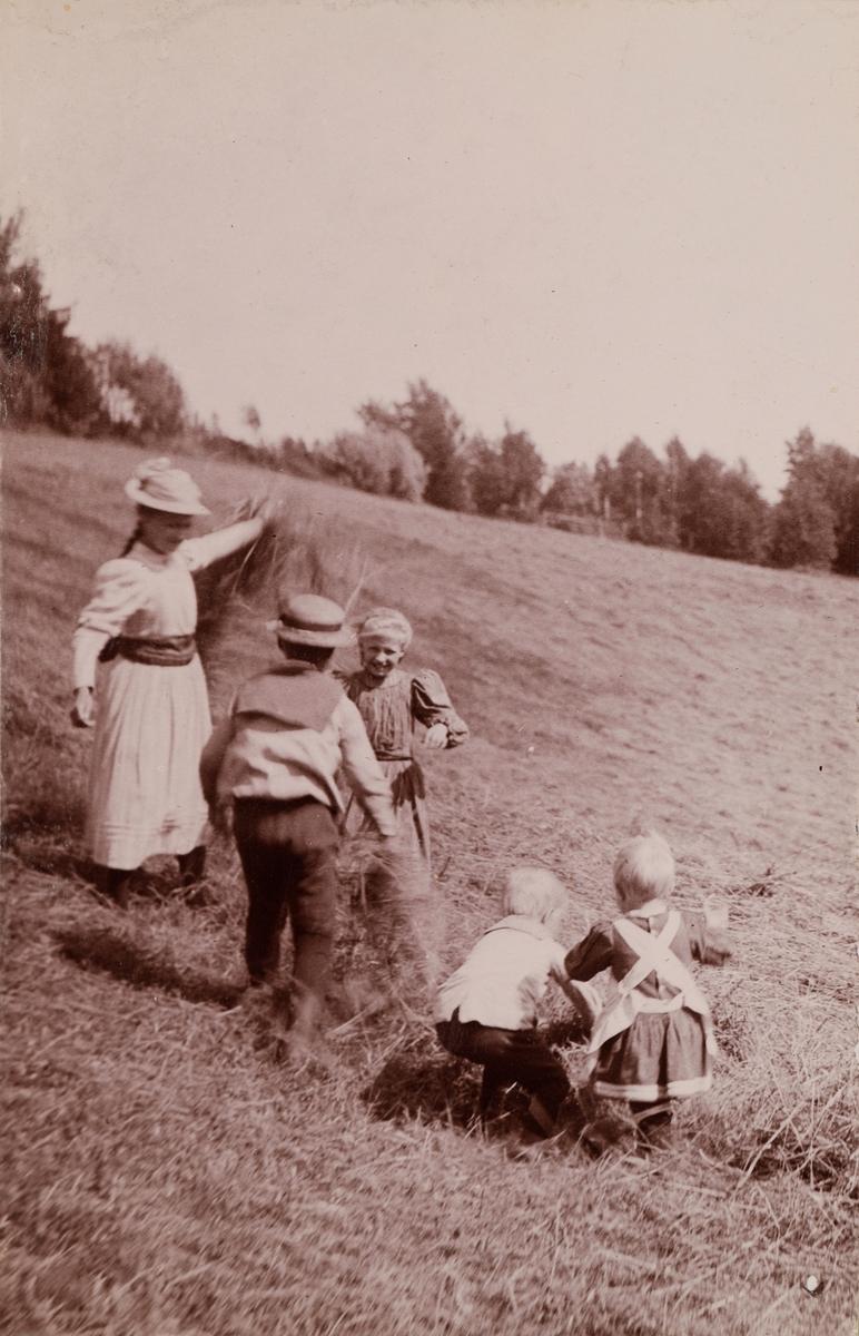 Fem barn leker i nyslått gress.