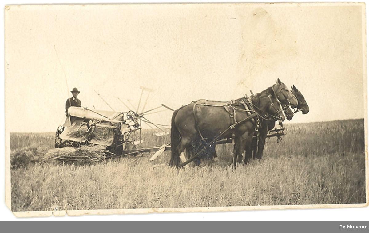 Mann på sjølbindar med fire hestar ute i åker