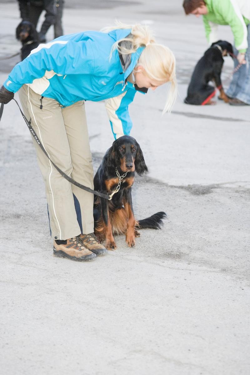 Dressurkurs for hund. Hundeier og hund følger instruksjon på kurs.
