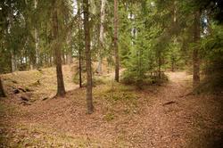 Hovinsholm, Helgøya, Hedmark. Tydelige spor det som kan ha v
