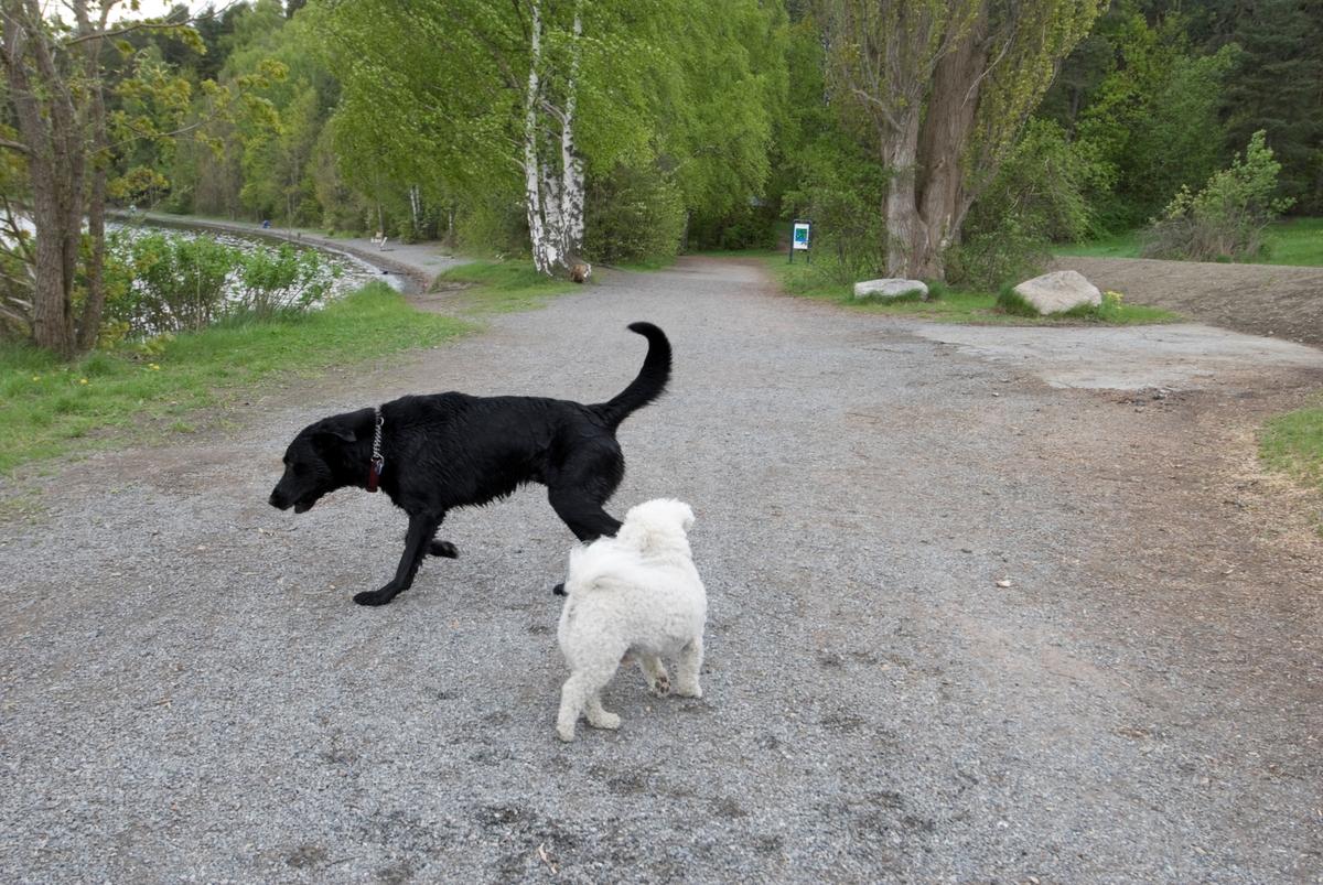 Hunden Chico på tur treffer på en annen hund.
