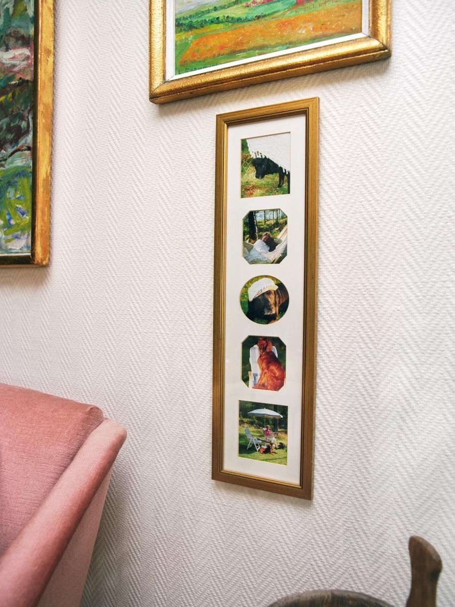 Hjemme hos hunden Chico. En ramme med fotografier av en hund.