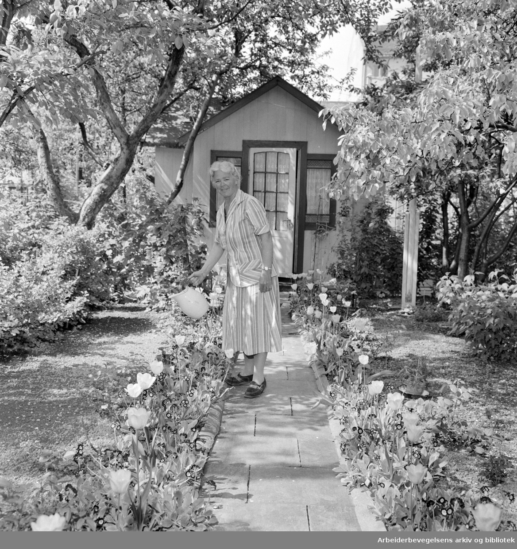 Etterstad Kolonihage. Juni 1958.