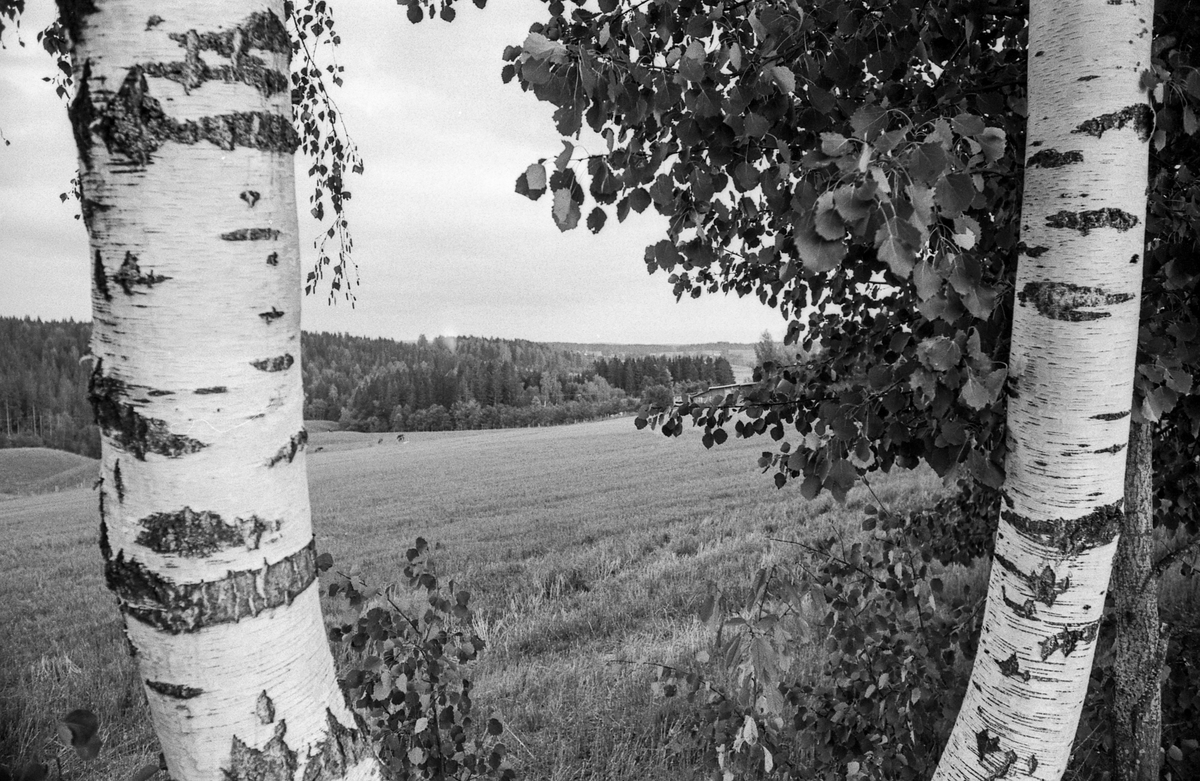 Kroer-landskap ved kirken, området er innenfor flystøy-sonen hvis hovedflyplassen blir i Hobøl.