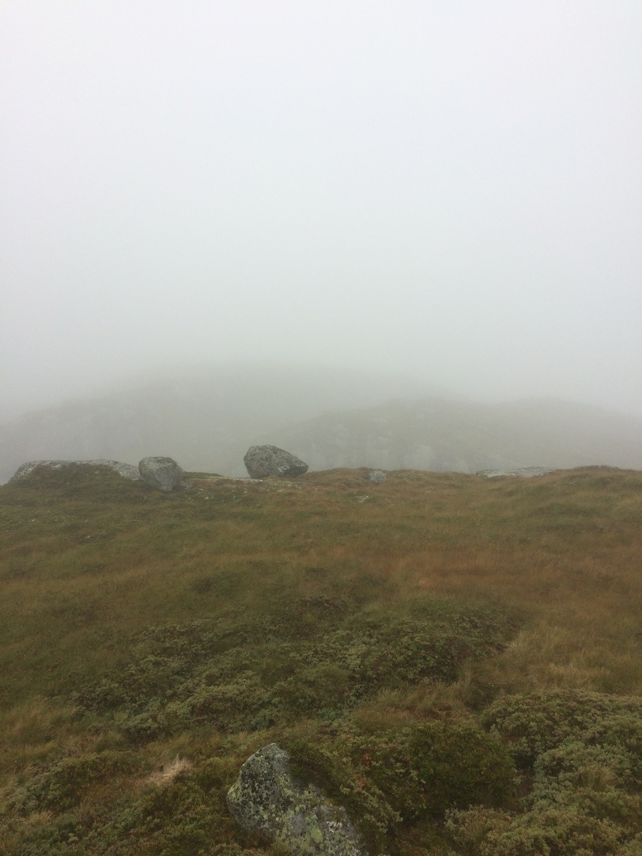 Samling av sauer frå heia. 5000 sauer blir samla ved Flåtå ved Monsvatnet. Bilde 12 og 13 er av eit revehi med mange inngangar. Bilde 14-21 er av Asbjørn Haga og Aina Gjesdal sine sauer.