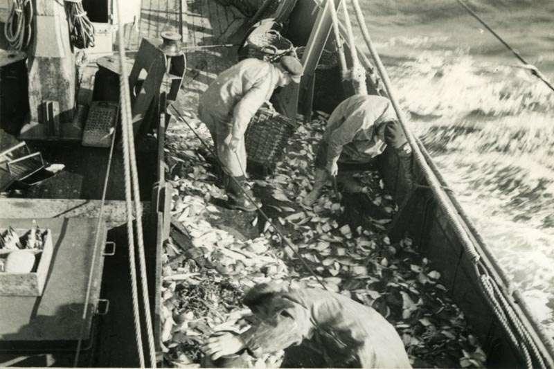 Fiskere med fangst