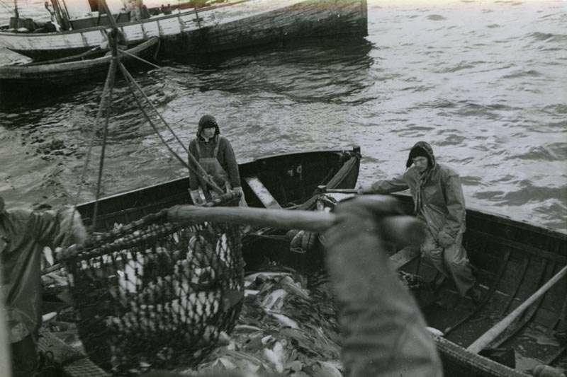 Fangsten håves inn. Fiskere i hjelpebåter