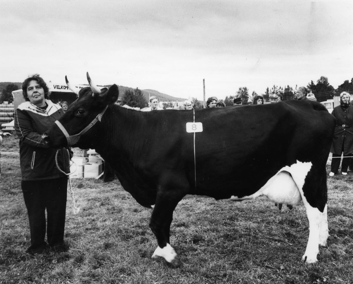 Dyreutstilling Tynset-martn 1981