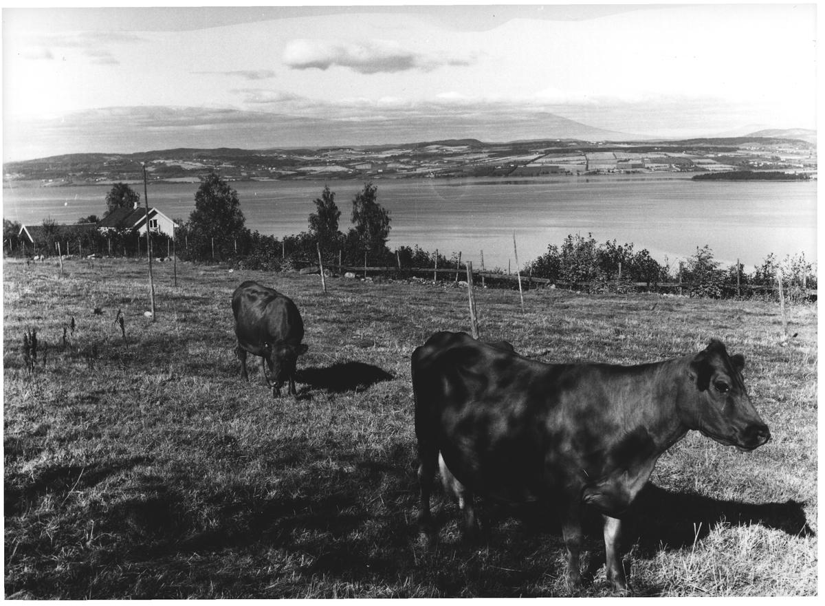 Fra Ø. Toten mot Mjøsa og Nes