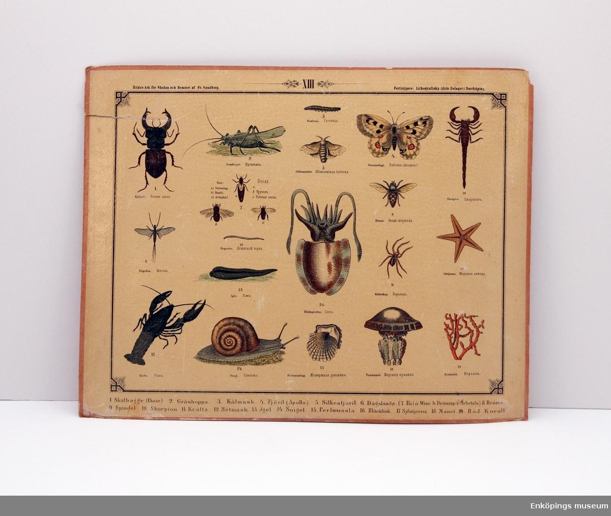 Skolplansch som visar olika insekter, spindeldjur, blötdjur, maskar och andra organismer. Från Litografiska Aktie Bolaget i Norrköping.  Skolplanscher användes i de flesta skolämnen under 1900-talet. År 1900 kom en ny läroplan (normalplan) där lektionerna skulle åskådliggöras för eleverna för att de skulle förstå bättre. Detta gjorde att räknestavar, skolplanscher, stora kartor och den svarta tavlan blev viktiga skolredskap.