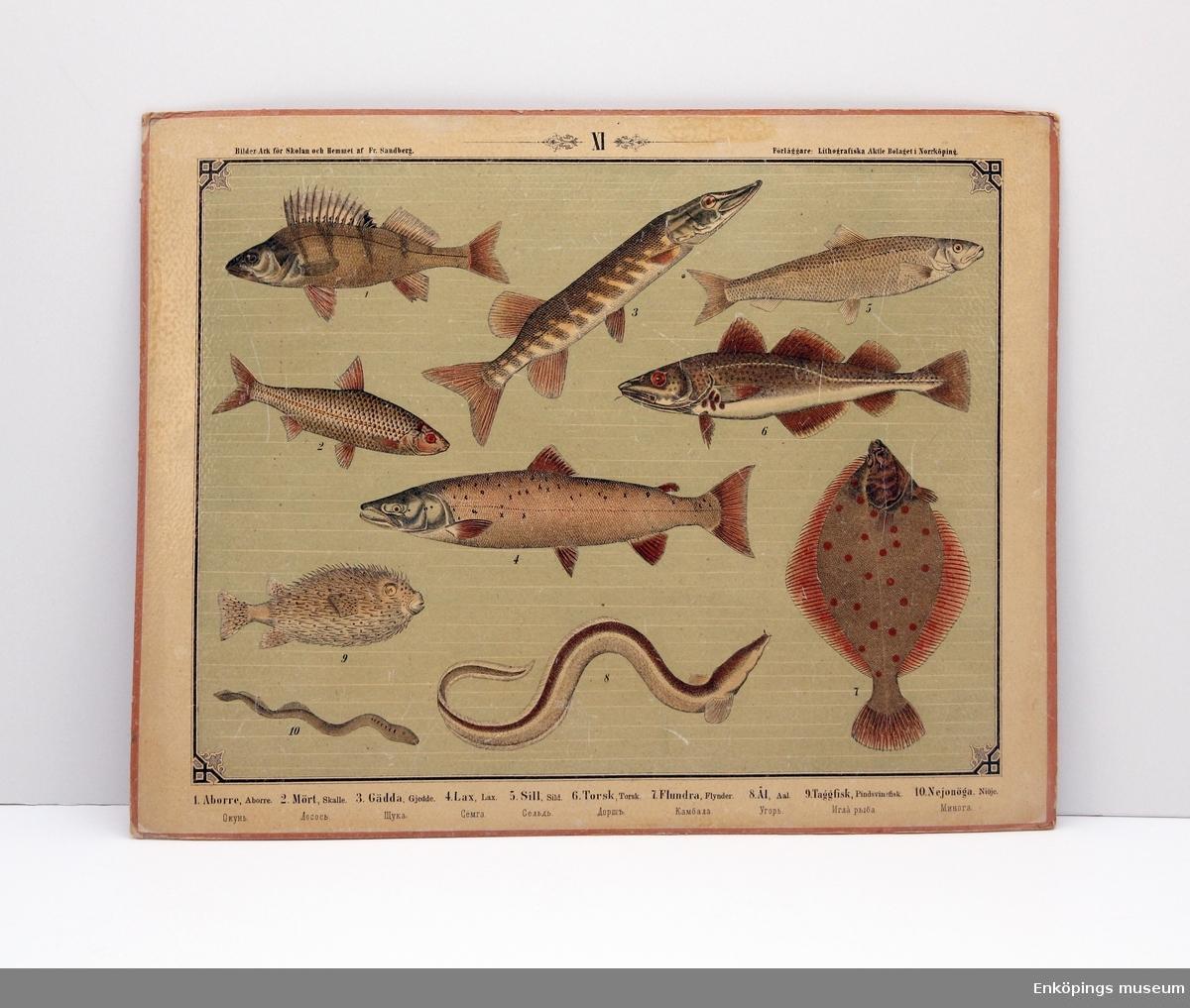 Skolplansch som visar olika fiskar. Från Litografiska Aktie Bolaget i Norrköping.  Skolplanscher användes i de flesta skolämnen under 1900-talet. År 1900 kom en ny läroplan (normalplan) där lektionerna skulle åskådliggöras för eleverna för att de skulle förstå bättre. Detta gjorde att räknestavar, skolplanscher, stora kartor och den svarta tavlan blev viktiga skolredskap.